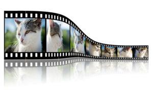 Customized videos