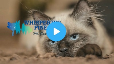 Review video of Whispering Pines Pet Resort