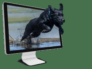 Website Design - Exede Digital